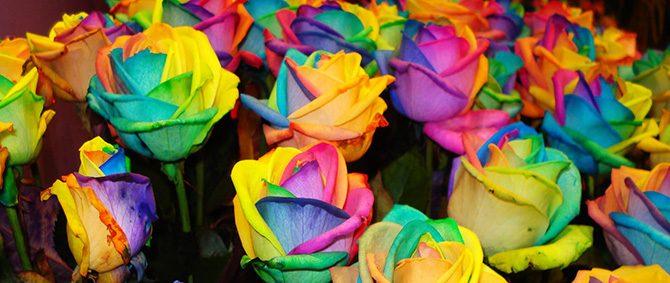 Expoflora: culinária e a beleza das flores