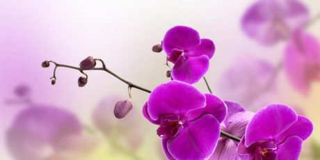Aprenda a fazer sua orquídea florescer