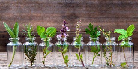 10 Ervas que você pode cultivar o ano todo em casa usando apenas água